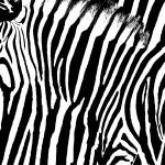 Carcinoid: The Zebra Diagnosis