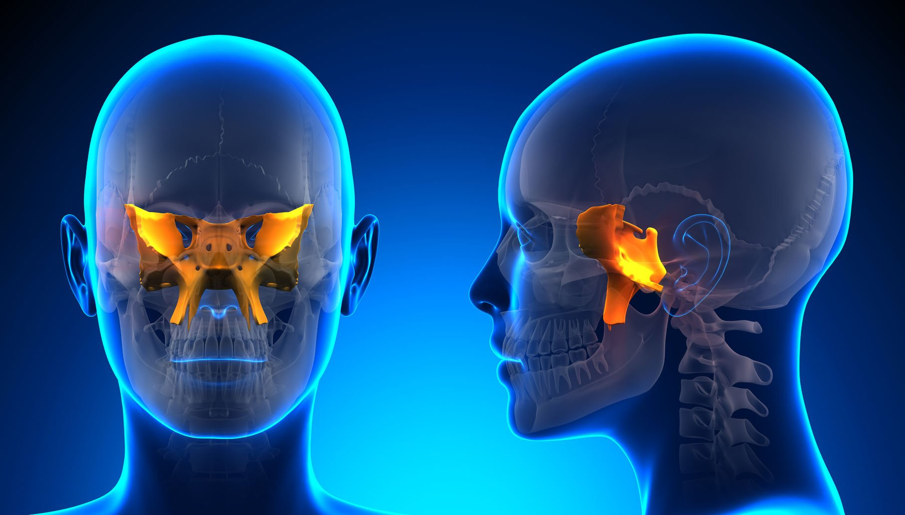 neurocranial restructuring – naturopathic doctor news and review, Sphenoid