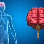 The Brain-Gut-Enteric Microbiota Axis: A New Twist on Mind-Body Medicine