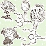 Opiate Addiction: Pathophysiology and Herbal Interventions