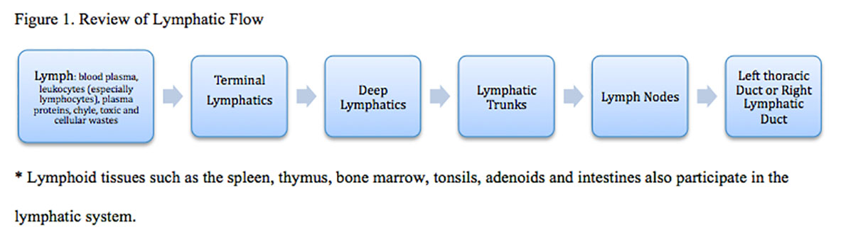 Moore2_Figure_1_ Review_of_ Lymphatic_Flow_Scholarship_2013