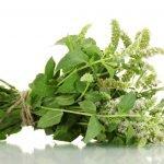 Rosmarinic Acid for Allergies