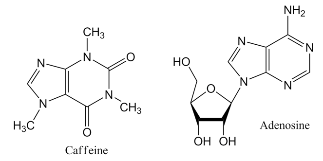 Figure. Chemical structure of caffeine and of adenosine