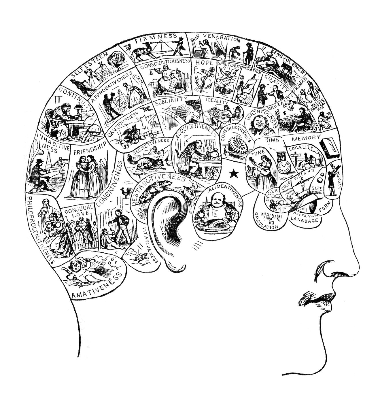 The Use of Phrenology in Naturopathy – Naturopathic Doctor News and ...