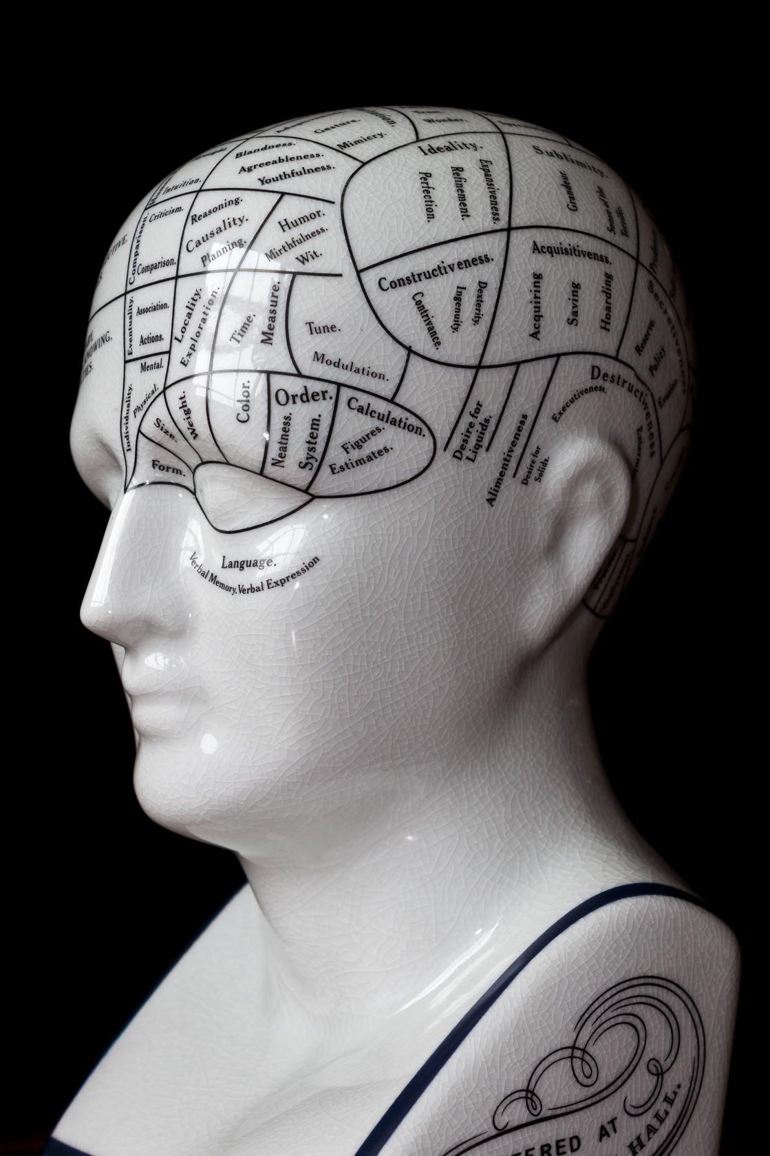 phrenology examples