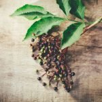 Pre-Flight Herbal Regimen: Elderberry