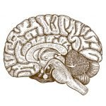 New Role of Cerebellum in Cognition
