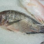 Fish Skin to Treat Second/Third Degree Burns