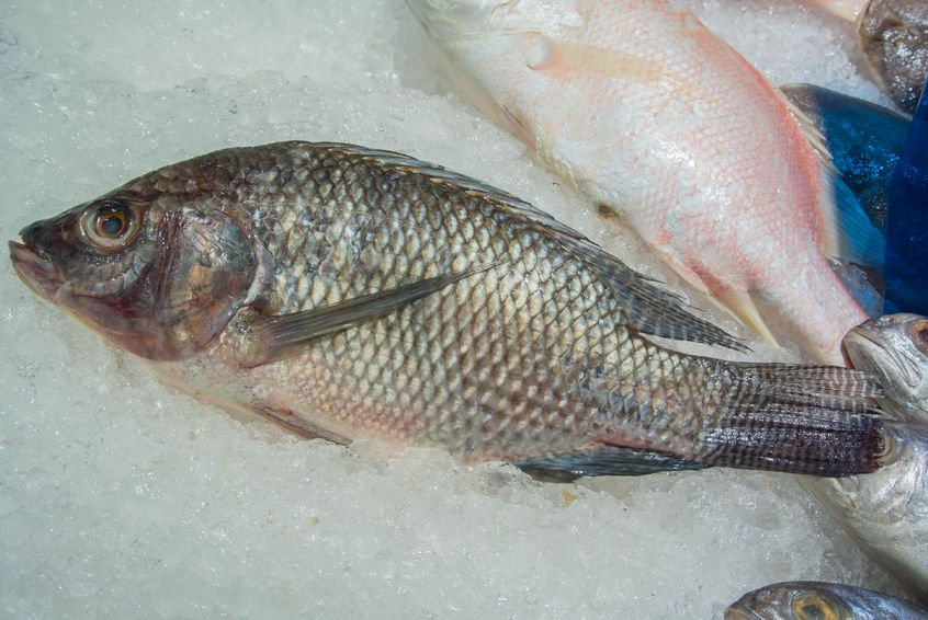 Fish skin to treat second third degree burns for Fish skin for burns
