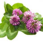 Fermented Red Clover to Decrease Hot Flashes of Menopause