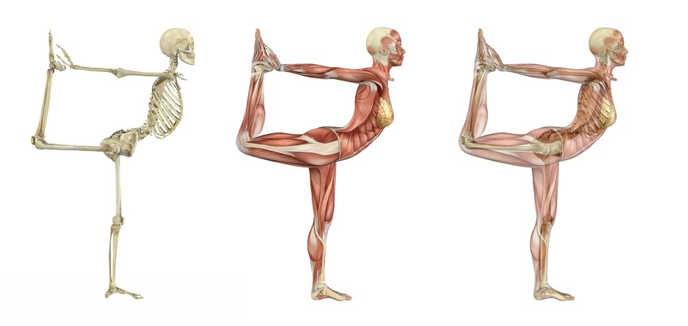 Using Yoga To Enhance Anatomy Learning Naturopathic Doctor News