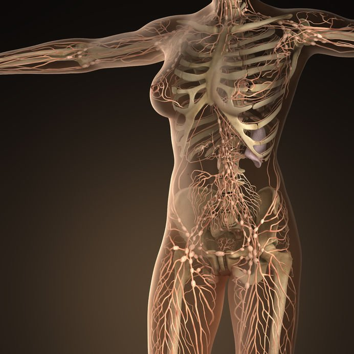 The Lymphatic System: A Critical Factor in Female Hormonal Balance ...