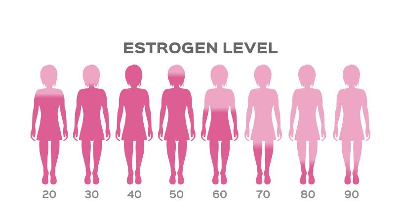 Image result for estrogen