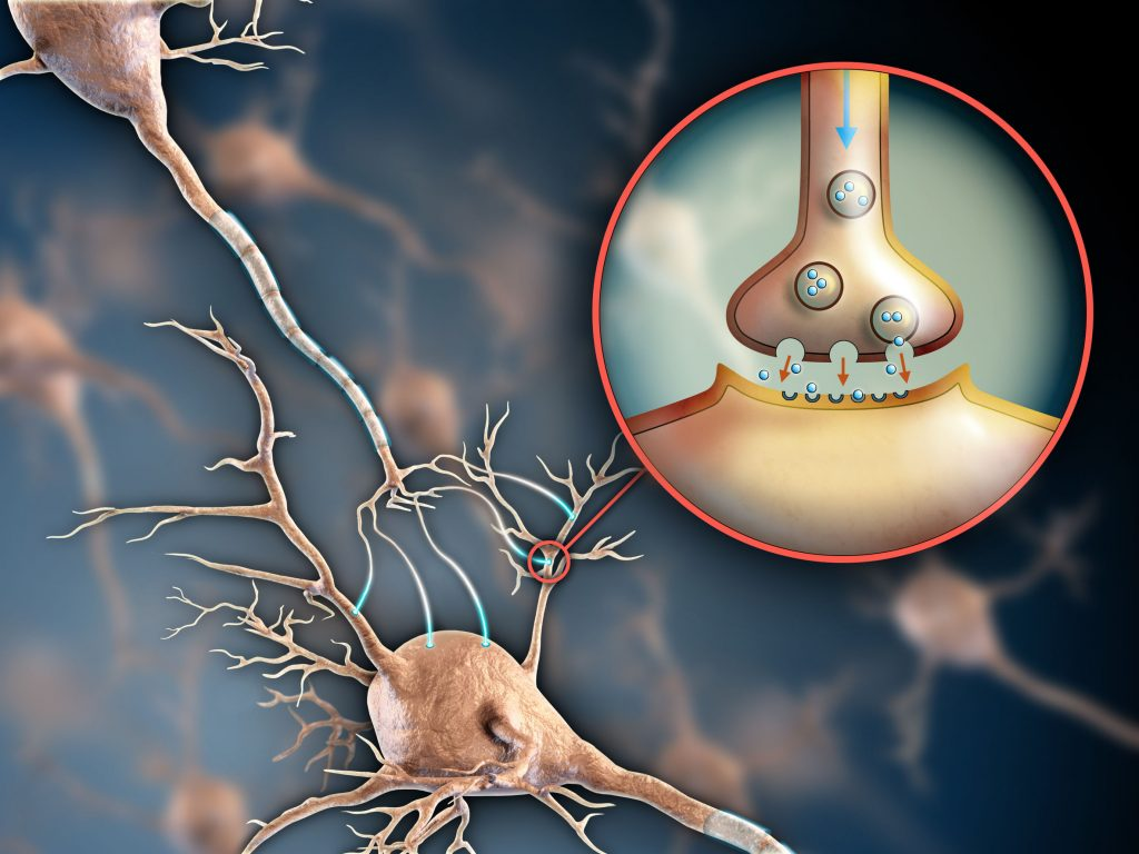 Serotonin May Play Role in Reacting to Emergency Situations