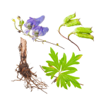 The Use of Aconite Root for Neuropathic Pain