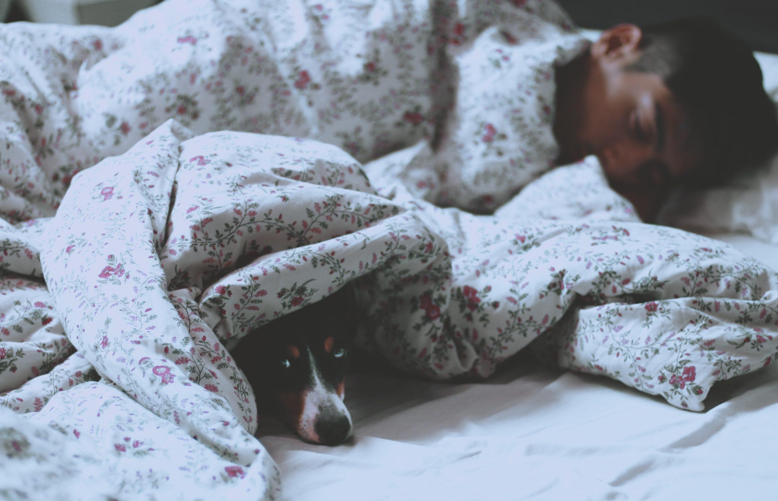 "O que acontece no cérebro para ""desconectar"" durante o sono? – Notícias e análises sobre médicos naturopatas"