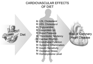 C:\Users\Mary\Documents\NDNR\Issues to proof\May '20 articles to edit\Parcell_May_2020\Figure_CV effects of diet.JPG