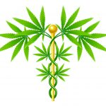 Cannabis Potency is Much Higher than In Previous Generations