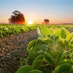 Plants Circadian Rhythms Can Change Just Like Ours