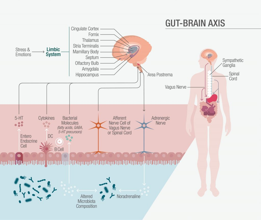 Modulating Mood and More via the Gut-Brain Axis – Naturopathic Doctor News and Review 3