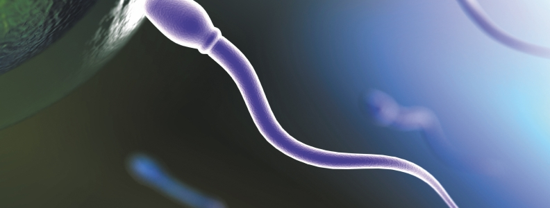 Herbs for Sperm Disorders