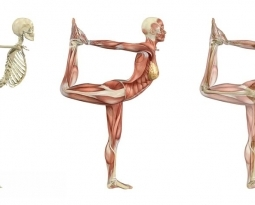 Using Yoga to Enhance Anatomy Learning