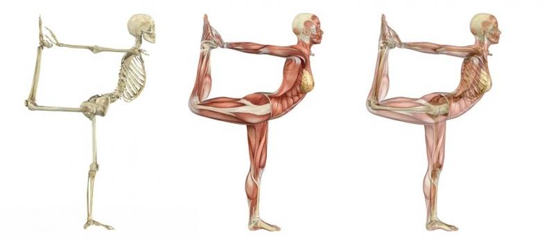 Using Yoga to Enhance Anatomy Learning