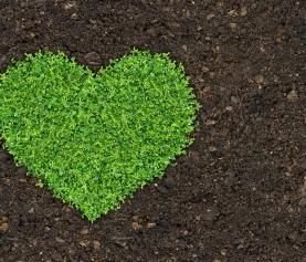 Beyond Hawthorn: Herbs for Cardiovascular Health