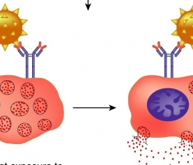 Mast Cell Activation Syndrome