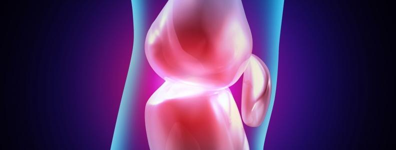 High Fat Diet Can Benefit Cartilage Repair