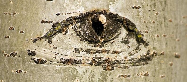 Dry Eye Disease and EFAs