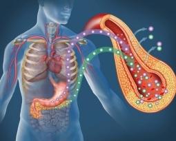 Type 1 Diabetics Found to Produce Insulin
