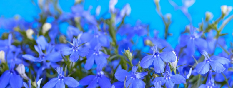The Musculoskeletal Aspects of Lobelia Inflata and Beyond