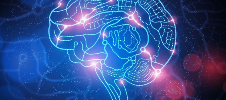 Varied Brain Connections Found In Individuals With Anger Disorders