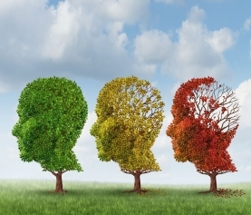 Age Related Cognitive Decline: Evidence-Based Strategies for Prevention and Treatment of Age-Related Cognitive Decline