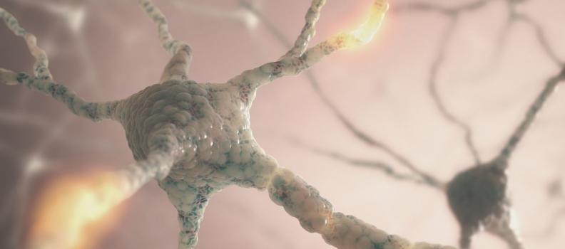 Neurotransmitter Immune Effects: A Whole-Body Approach