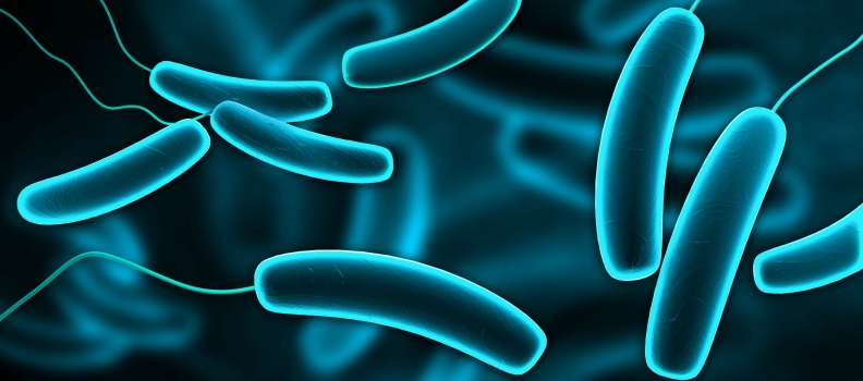 Gut Bacteria Tell Us When We Are Full