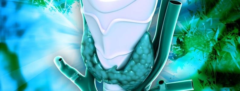 Adipose Tissue – A Neuroendocrine Organ