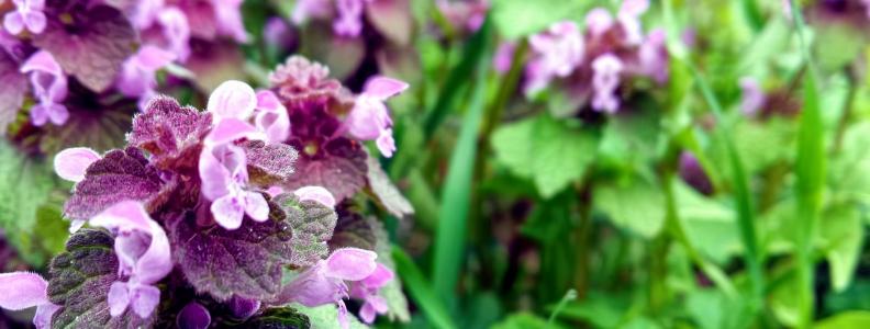Botanical Insights