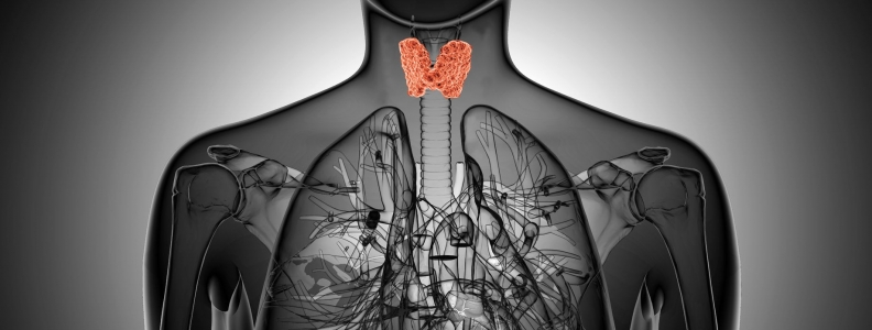 Thyroid Hormone as Fertility Treatment