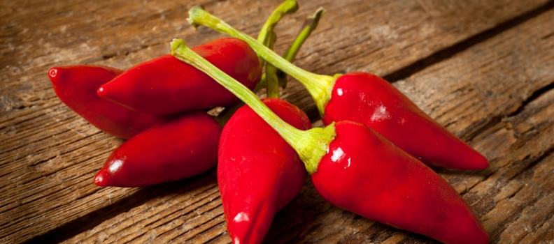 Hot Chili May Unlock a New Treatment for Obesity