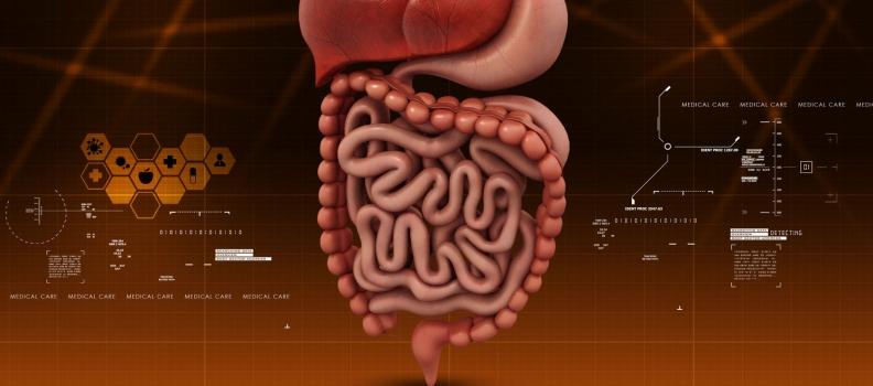 Lactoferrin – A Balanced Prebiotic in the Treatment of Dysbiosis