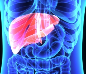 The Liver, Thyroid, & MetS