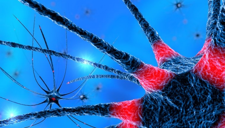 Neuroinflammation & Lyme Disease – Naturopathic Doctor News