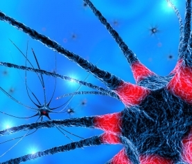 Neuroinflammation & Lyme Disease