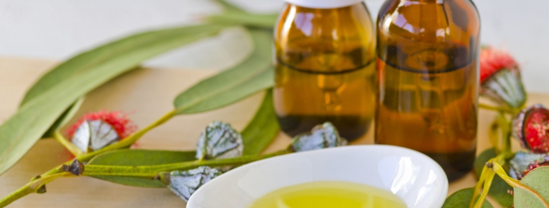 Eucalyptus Oil: A Possible Aid for Cancer Patients