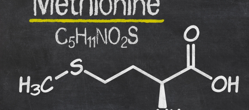 Methionine And Cancer Growth Control