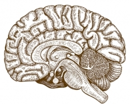 New Role for Cerebellum with Cognition