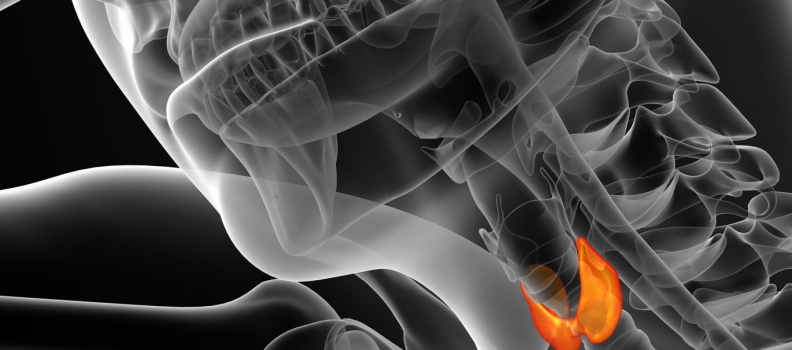 Optimizing Thyroid Function