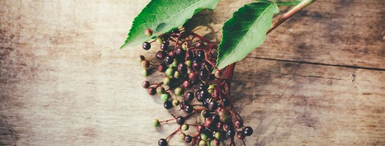 Pre-Flight Herbal Regimen: Elderberry